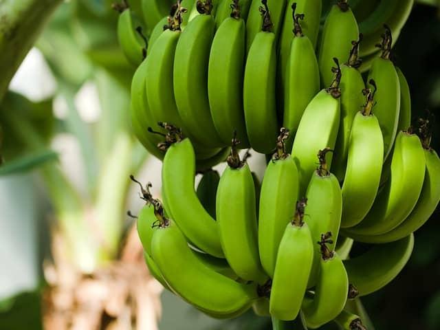 Um meinen Baum zu heiraten wird meist ein Bananenbaum genommen
