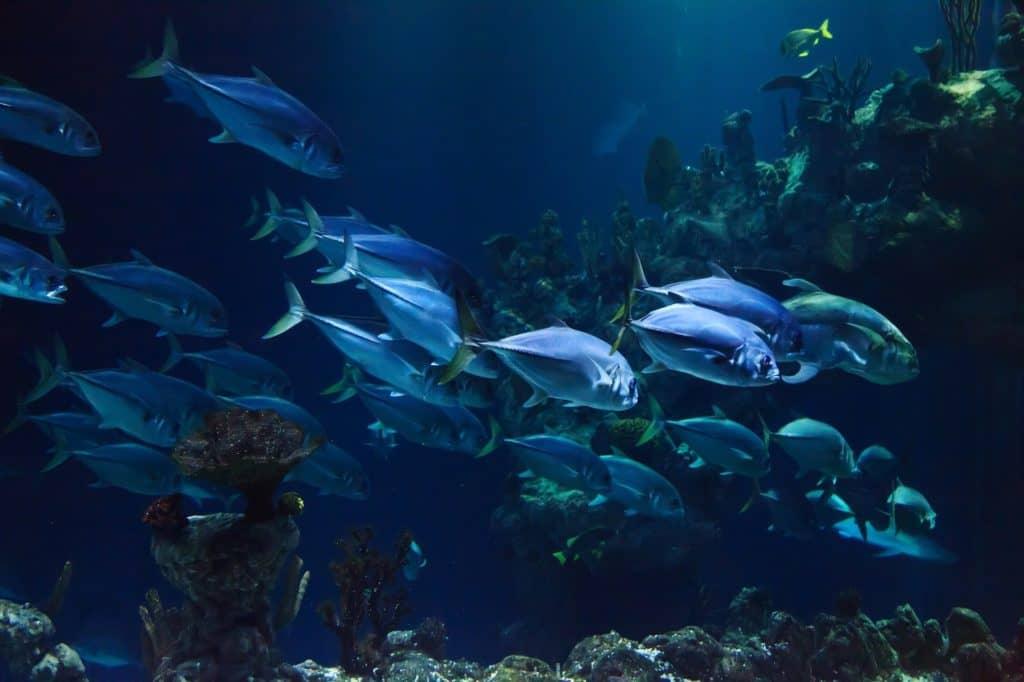 blaue Fische im großem Sealife Aquarium